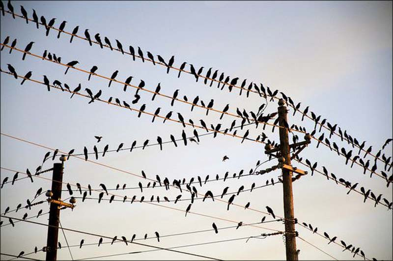 birds on wire 01
